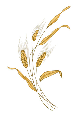 Ears of wheat in the wind Vector