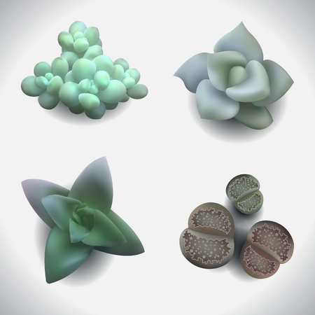photorealistic: Set with a beautiful succulents. Photo-realistic vector.