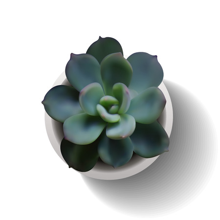 plant pot: Succulent plant in the pot. Vector illustration isolated on the white background. EPS10