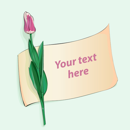 Beautiful pink tulip with piece of paper for your text Vektorové ilustrace