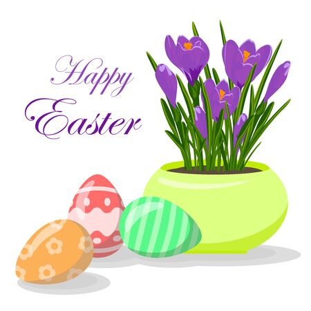 Easter eggs and violet crocuses in yellow flowerpot. Groving up saffron flowers. Vector illustration