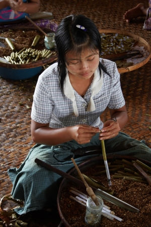 Unknown girl  Manual production of cigars  Factory on the Inle lake