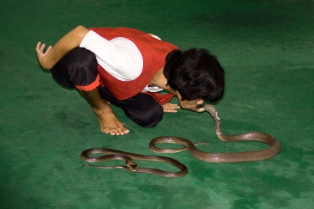 Thailand, island Koh Samui, September 21  The unknown man kisses a snake on representation in a snake farm