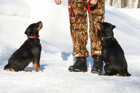 The man trains two puppies of a Jagdterrier