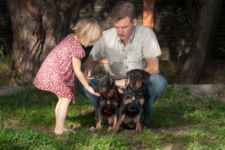 The father shows to the daughter as it is necessary to communicate with two sitting little dogs photo