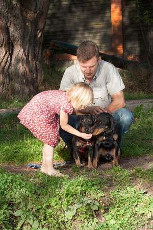 The girl in a summer dress feeds two dogs terriers under supervision of the father in a light shirt Stock Photo