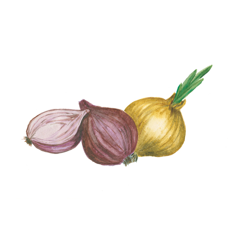 onion isolated: Red and yellow sliced onion isolated. Watercolor illustration Stock Photo