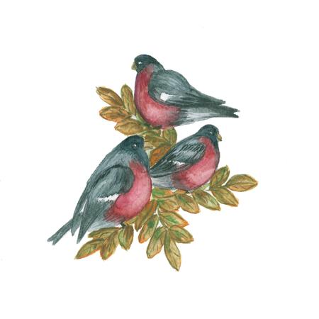 Composition tree branch, bullfinch bird. Watercolor illustration Stock Photo