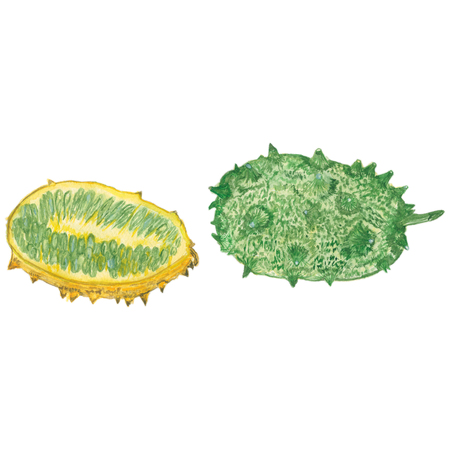 kiwano melon on white background