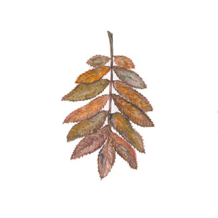 Autumn ashberry illustration Stock Photo
