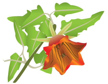 blooming orange flower and leaves, isolated on white background.