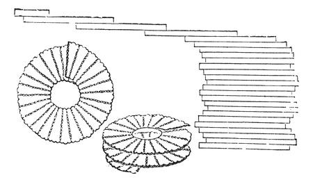 珪藻 - クサリケイソウ paxillifer (右) と Meridion vernale (左、中央)、拡大、ヴィンテージの刻まれた図。Trousset 百科事典 (1886年-1891 年)。