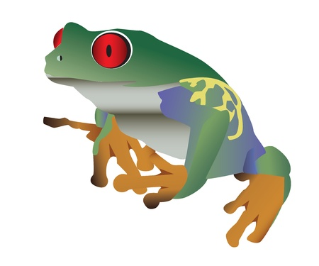 bullfrog: Red eyed colorful frog