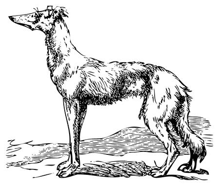 レトロ: 古い彫刻のサルーキまたはボルゾイの犬の狩猟犬の最も古い品種であります。辞典 encyclop dique Trousset、Trousset 百科事典としても知られているパリ 1886年-1891 年からのスキャンします。  イラスト・ベクター素材