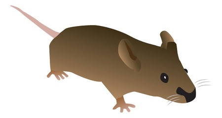 Brown Cartoon Mouse