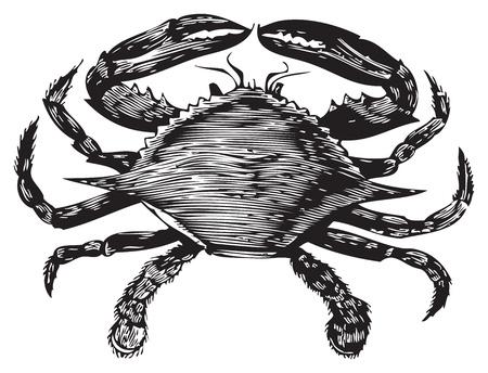 иллюстрация: Старый гравировка от Trousset энциклопедии голубого краба, черный и белый, векторизация с использованием живого следа.
