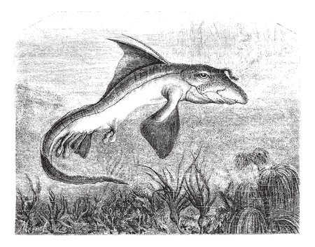 magasin pittoresque: Chimaera monstrosa or Rabbit fish or Rat fish, vintage engraved illustration. Magasin Pittoresque 1874