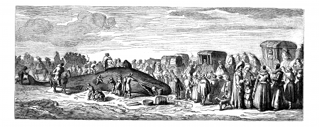 beached: Beached whale. - Drawing Bocourt, after a print of the collection Mouilleron, vintage engraved illustration. Beached Whale.  Magasin Pittoresque 1875.