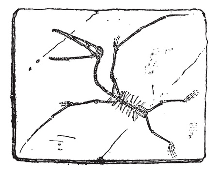 pterodactyl: Pterodactyl or Pterosaurs, vintage engraved illustration. Dictionary of words and things - Larive and Fleury - 1895. Illustration