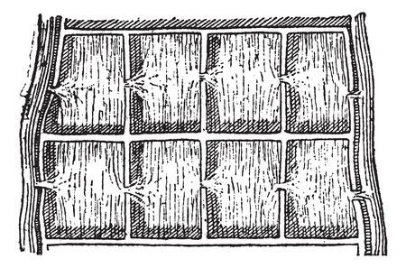 arrozal: Rice campo o campo de arroz, cosecha ilustraci�n grabada. Diccionario de palabras y las cosas - Larive y Fleury - 1895.