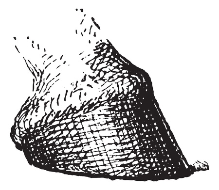 phalanx: Horses hoof, vintage engraved illustration. Dictionary of words and things - Larive and Fleury - 1895.