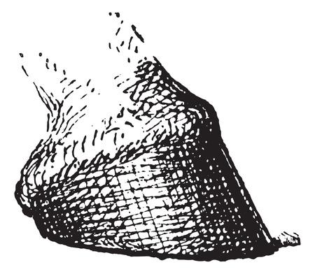phalanx: Zoccolo di cavallo, vintage illustrazione inciso. Dizionario di parole e cose - Larive e Fleury - 1895.