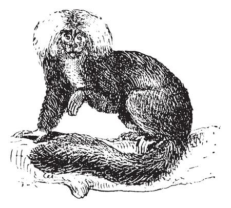saki: Sakis or Saki monkey, vintage engraved illustration. Dictionary of words and things - Larive and Fleury - 1895.