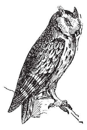 レトロ: コノハズク支店、ヴィンテージの刻まれた図に腰掛け。辞書の単語との事 - Larive、フルーリ - 1895年。