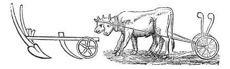 Plough, vintage engraving. Old engraved illustration of a type of Plough being pulled by water buffalos.