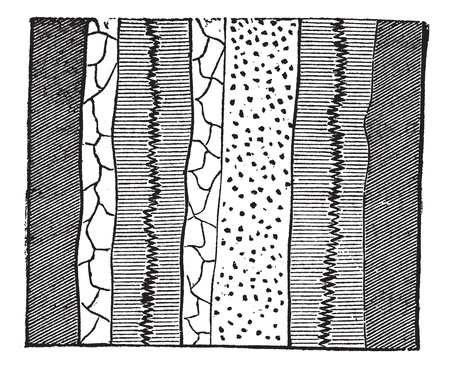 splitting: Geological Vein, illustration showing two veins splitting two separate layers of quartz into four portions, vintage engraved illustration. Trousset encyclopedia (1886 - 1891).