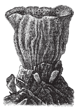 pores: Sponge attached to a rock substrate, vintage engraved illustration. Trousset encyclopedia (1886 - 1891). Illustration