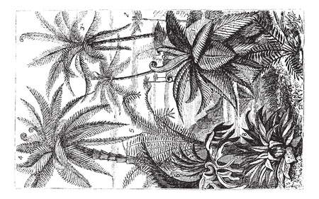 treelike: Arborescent Ferns during the Carboniferous Period, vintage engraved illustration. Trousset encyclopedia (1886 - 1891).