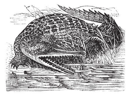 Gharial or Gavialis gangeticus or  Indian gavial or gavial or Fish-eating crocodile or Long-nosed crocodile, vintage engraving. Old engraved illustration of Gharial in the Ganges.  Stock Vector - 13771710