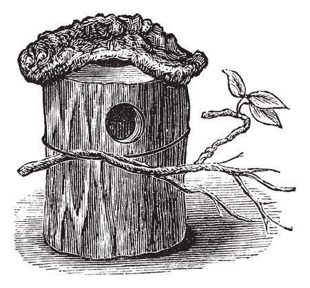 Parakeet Nest made of Hollow Tree Trunk, vintage engraved illustration. Trousset encyclopedia (1886 - 1891). Vector