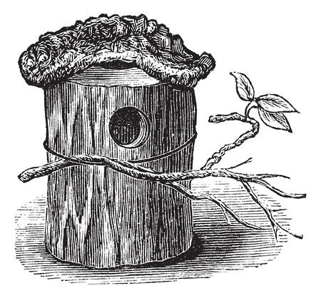 bird house: Parakeet Nest made of Hollow Tree Trunk, vintage engraved illustration. Trousset encyclopedia (1886 - 1891).