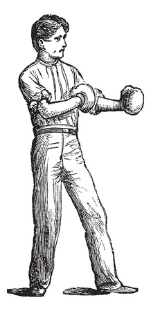 pugilism: Position of the boxer, vintage engraving. Old engraved illustration of Position of the boxer.