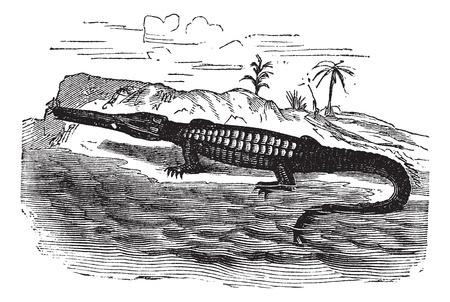 Teleosaurus, vintage engraved illustration. Trousset encyclopedia (1886 - 1891). Vector