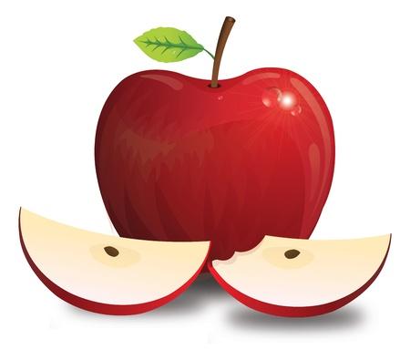 bitten: Manzana, fruta, rojo, con tallo de la hoja semillas, enteros y rebanados, Bitten, ilustraci�n vectorial