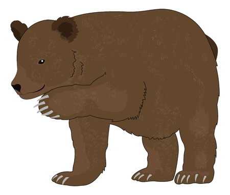 hibernate: Bear or Ursus arctos, Brown, vector illustration