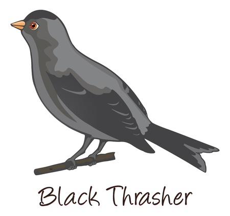 Brown Trasher, Perched on a Branch, Color Illustration Illustration