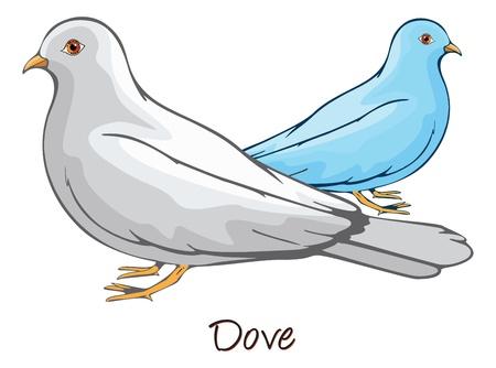 Dove, Pair, Color Illustration