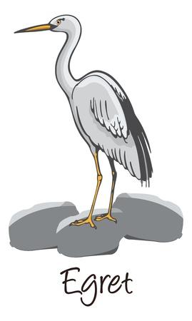 egret: Egret, Perched on a Rock, Color Illustration Illustration
