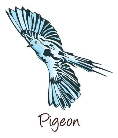 Pigeon in Flight, Color Illustration Çizim