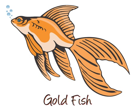 aquaculture: Goldfish, Color Illustration Illustration
