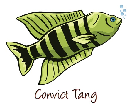 escamas de peces: Convict Tang, ilustración de color Vectores