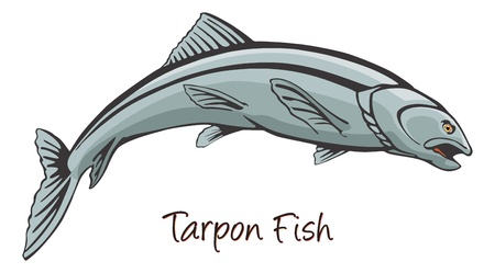 Tarpon, Color Illustration Vector