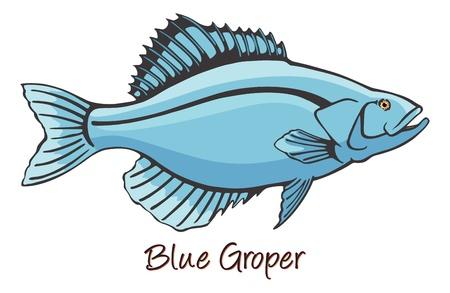 Grouper, Color Illustration Illustration