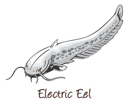 eel: Electric Eel, Color Illustration