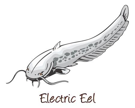 eel: Electric Eel, Color Illustration