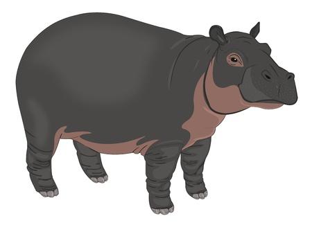 Hippopotamus or Hippopotamus amphibius, Black and Brown, vector illustration